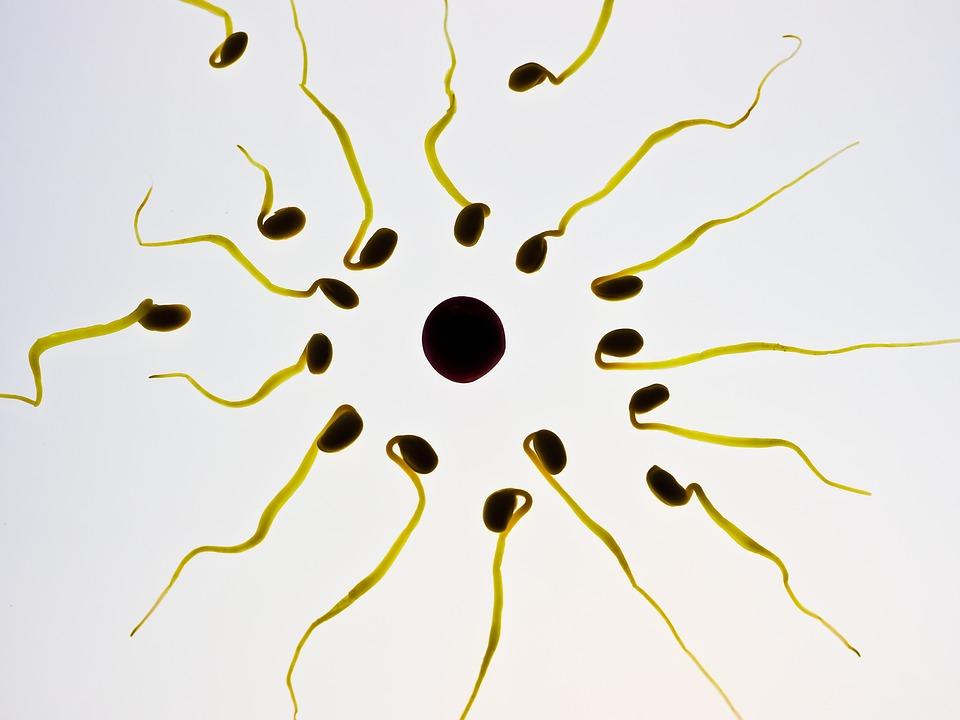 Esperma, Huevo, Fertilización, Célula Sexual, Ganador