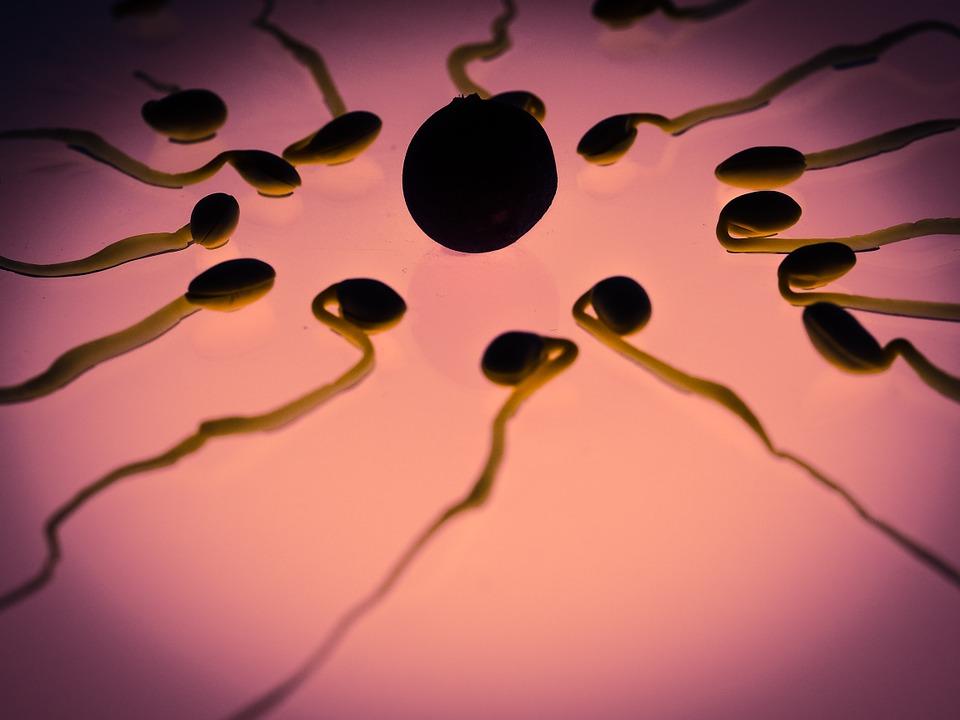 Conteo bajo de espermatozoides: la otra amenaza.
