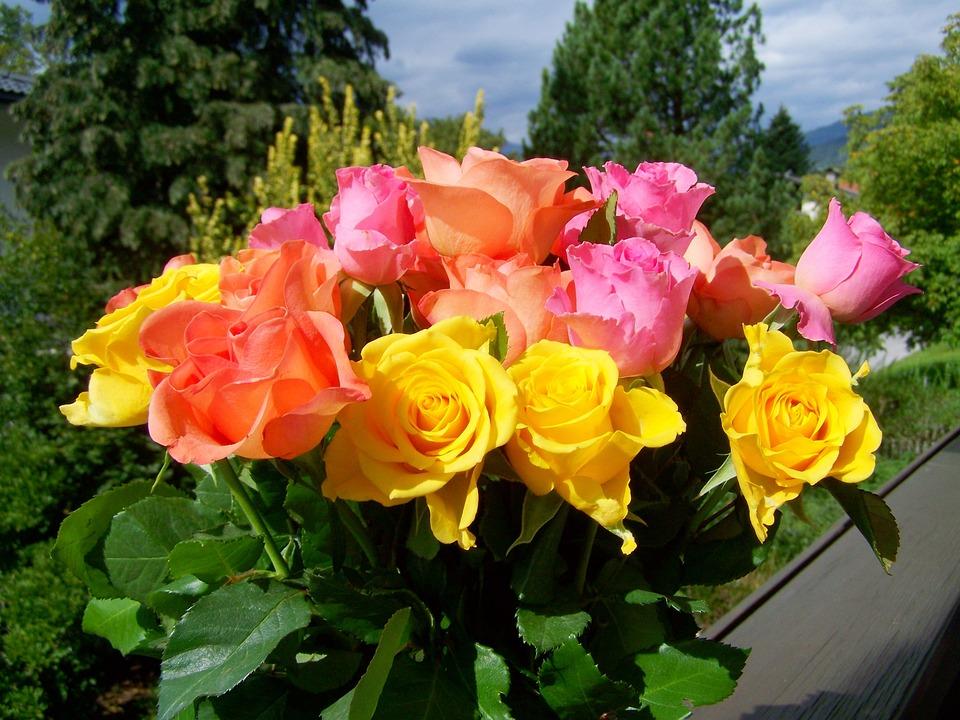 Afskårne Roser farverig buket af roser gul pink · gratis foto på pixabay