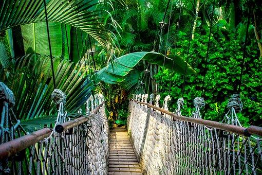 Puente Colgante, Selva, Amazonas