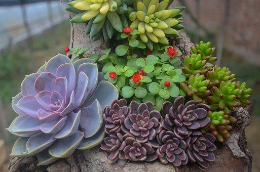 Plant, Succulent Plants, Flower