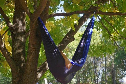 Hammock, Relax, Tree, Shade, Sleep, Nap