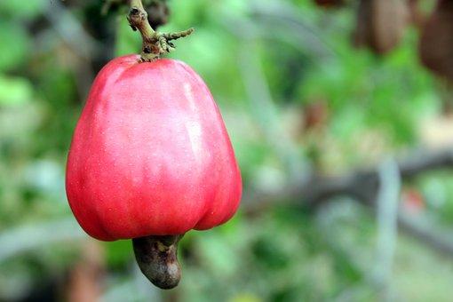 Natureza, Plantas, Árvores, Frutas, Caju