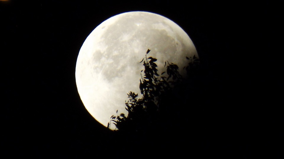 Moon, Eclipse, Moon And Foliage, Full Moon, Dark, Sky