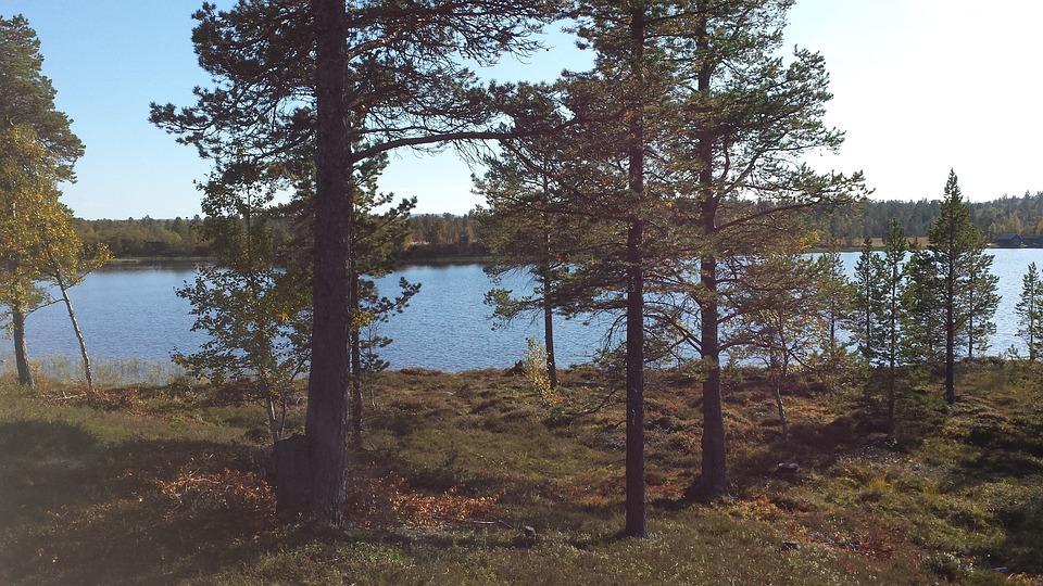 Nature, Tree, Lake, Härjedalen, Evening Sun