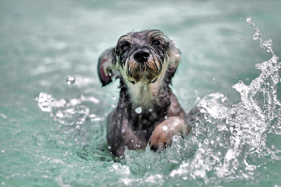 dog swimming styles