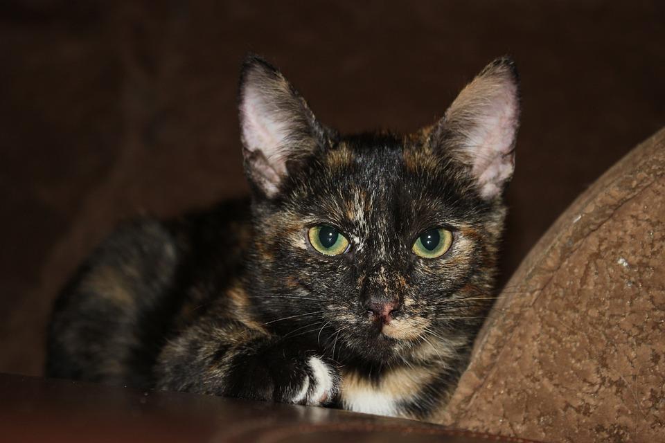 58ca3af481f5 Γάτα Γατάκι Αγάπη Κατοικίδιο - Δωρεάν φωτογραφία στο Pixabay