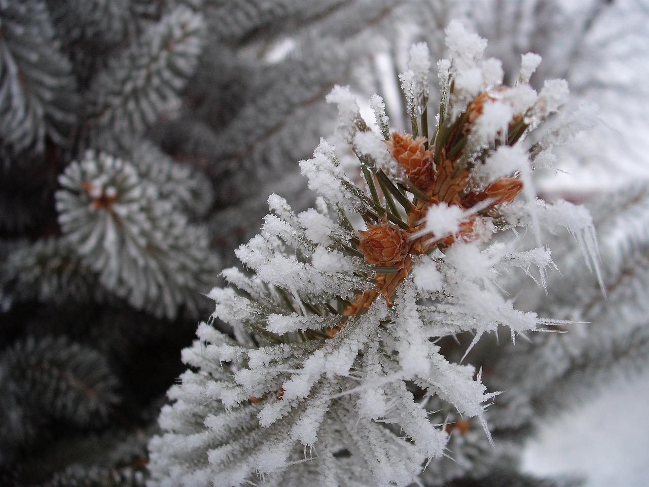 Картинка зимний мороз