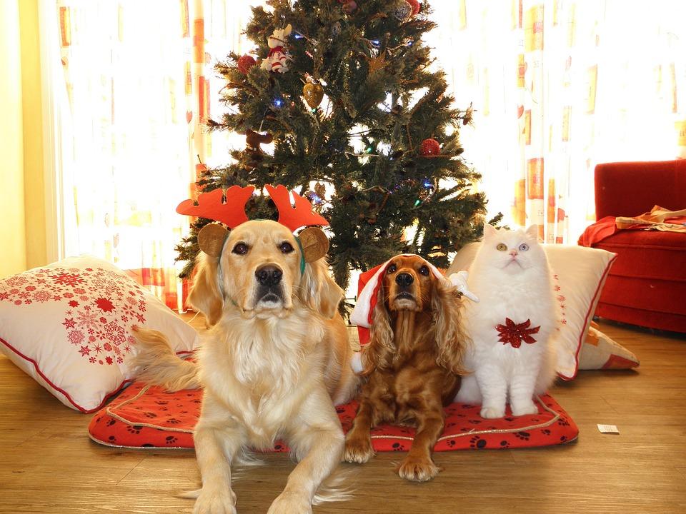Animaux De Compagnie, Noël, Chiens, Chat, Santa Claus