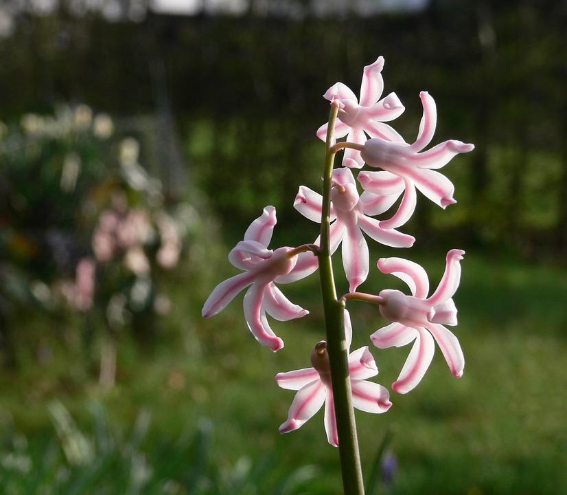 Flower Garden White Pink Star Free Photo On Pixabay