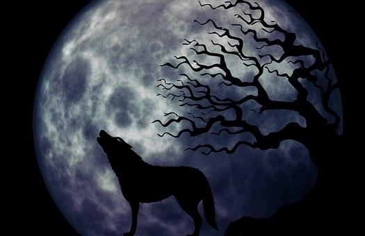 Lobo Imágenes Pixabay Descarga Imágenes Gratis