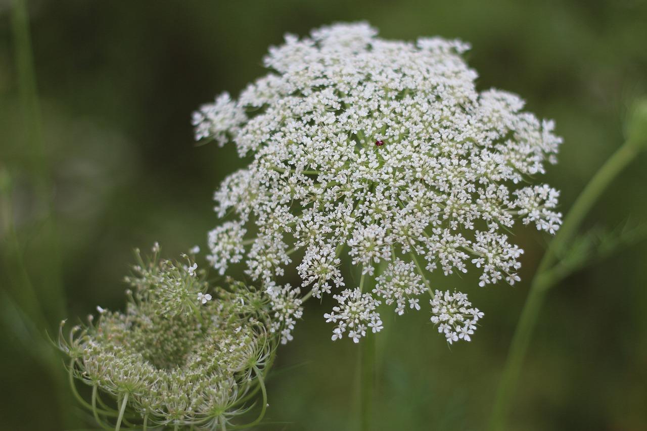 Съедобные дикорастущие растения фото с названиями танцуют, они