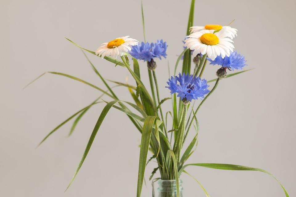 Gratis Billede Vilde Blomster Buket Blumenvase Gratis Billede P 229 Pixabay 963813
