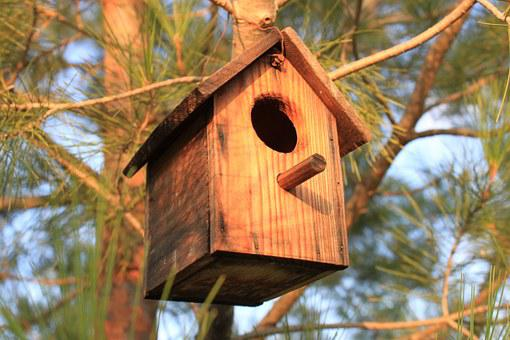 Birds, Casita, Wood, Nest