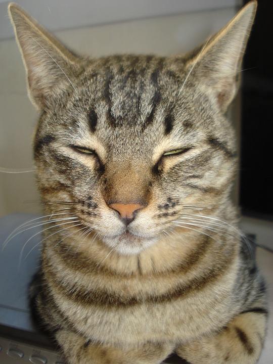 94 Gambar Gambar Kucing Betina Kekinian