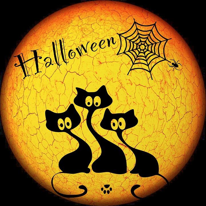 halloween moon weird cat night moonlight