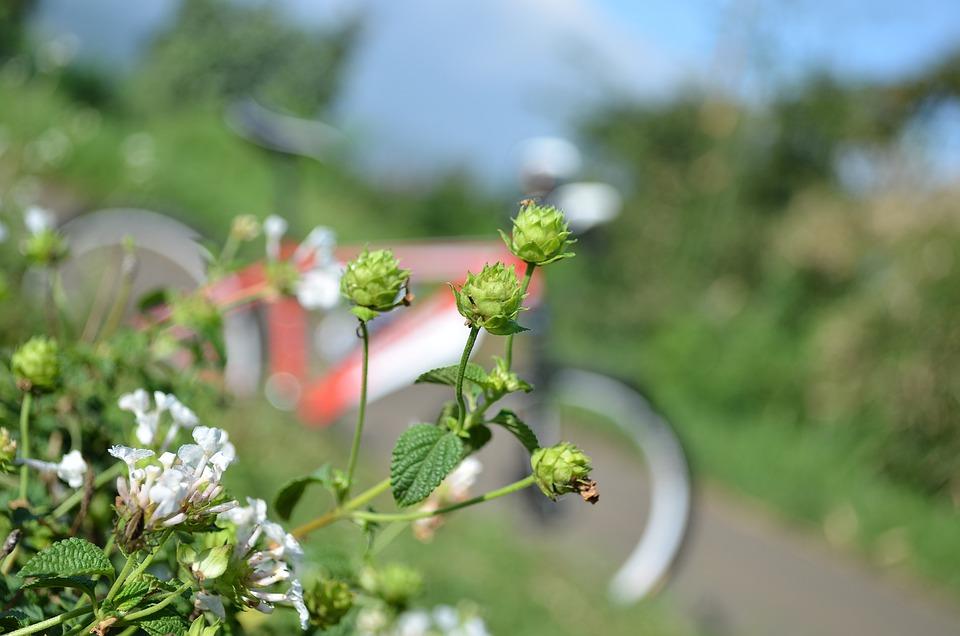 Flowers Bike Macro Free Photo On Pixabay