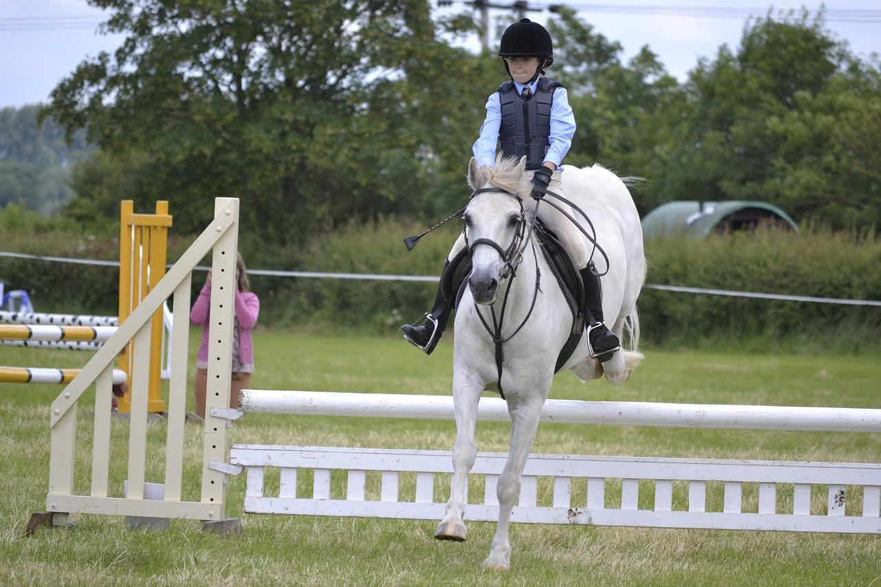 Horse Jumping White Free Photo On Pixabay