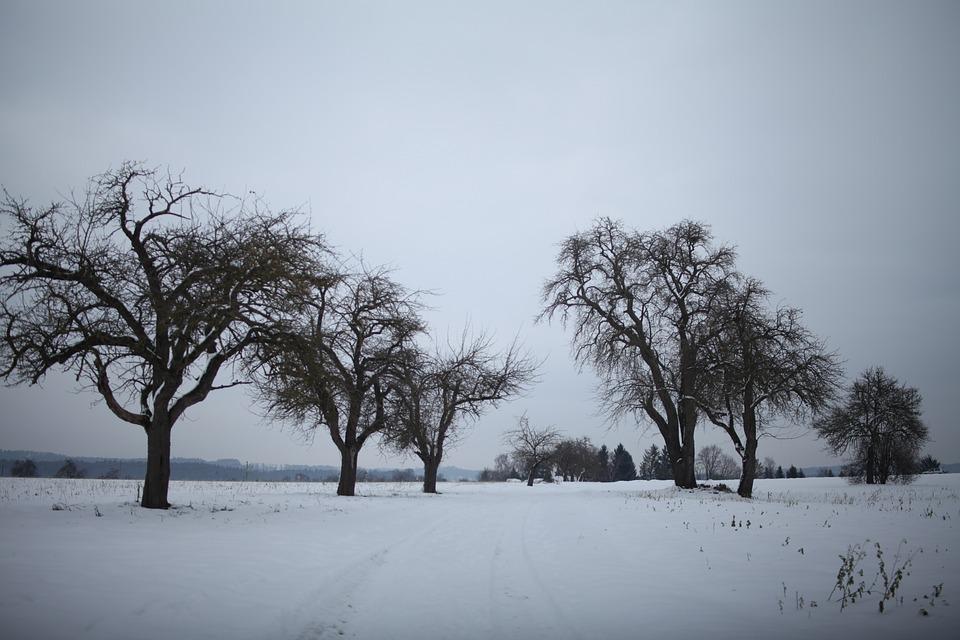 Schneelandschaft, Frost, Winterlich, Winter, Apfelbaum