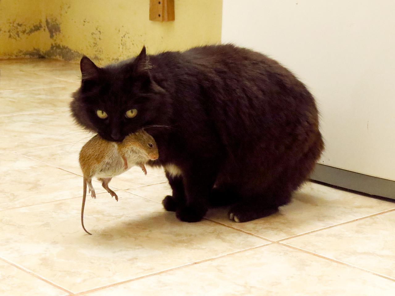 Domestic cat hunting behaviour