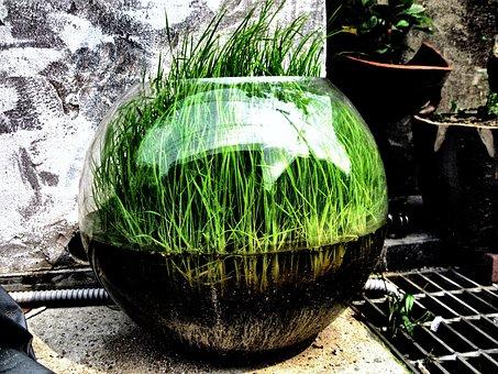 Grass, Bowl, Green, Turf, Art