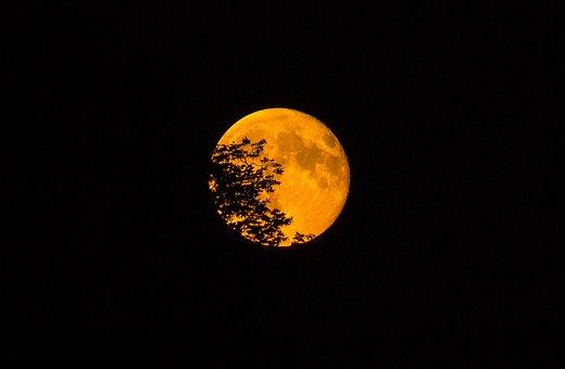 Super Moon, Leaves, Tree, Silhouette