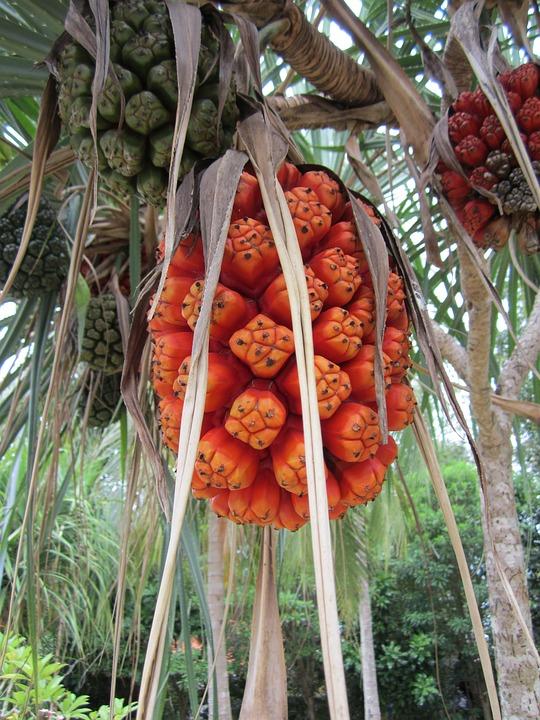 thailand fruit phuket free photo on pixabay