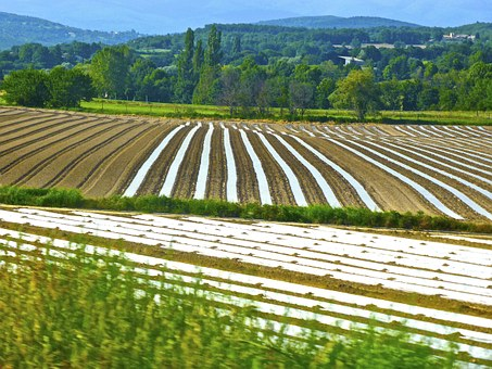 Crop, Rows, Agriculture, Field, Farm