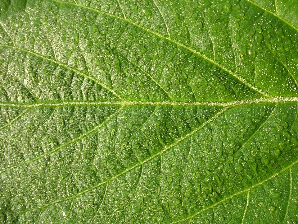 Photo collection textura de hojas hd - Plantas de hojas verdes ...