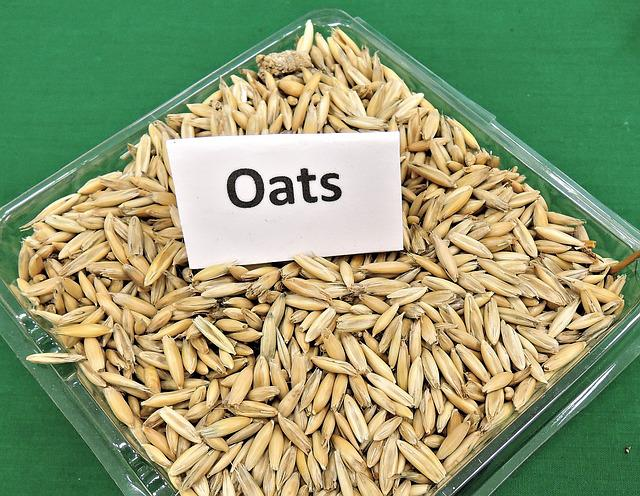 Free Photo Oats Grain Cereal Animal Feed Free Image
