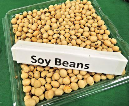 Soy Beans, Animal Feed, Soy Oil