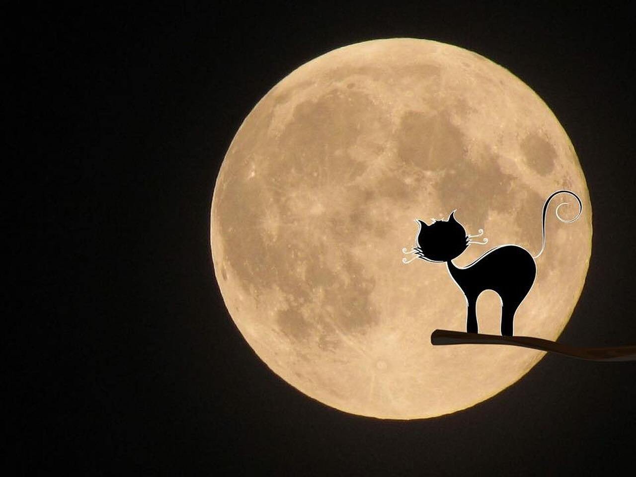 началось кошки под луной картинки влюбился