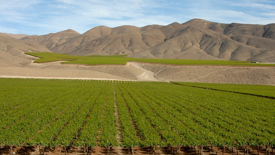 Chili, Vin, Andes, Paysage