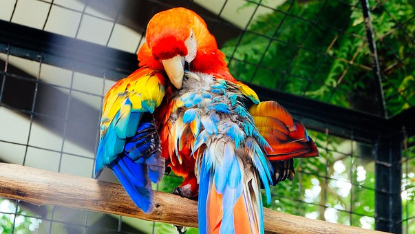Bird, Pet, Parrot, Animal, Feather