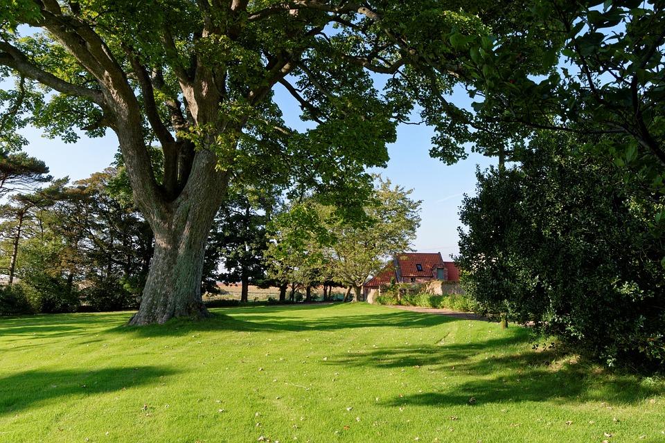Free photo tree lawn grass green landscape free for Casa jardin winter park