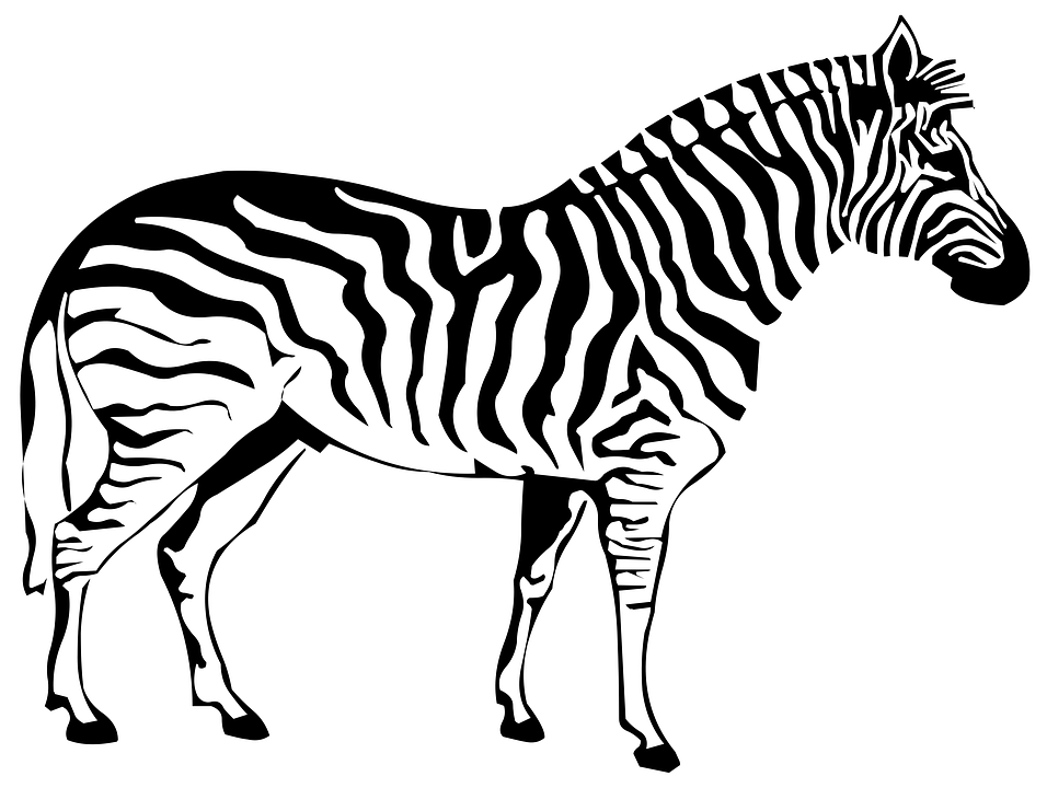 Line Drawing Zebra : Silhouette drawing outline · free image on pixabay