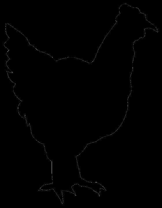 Illustration gratuite silhouette dessin contour poulet - Dessin de poulet ...