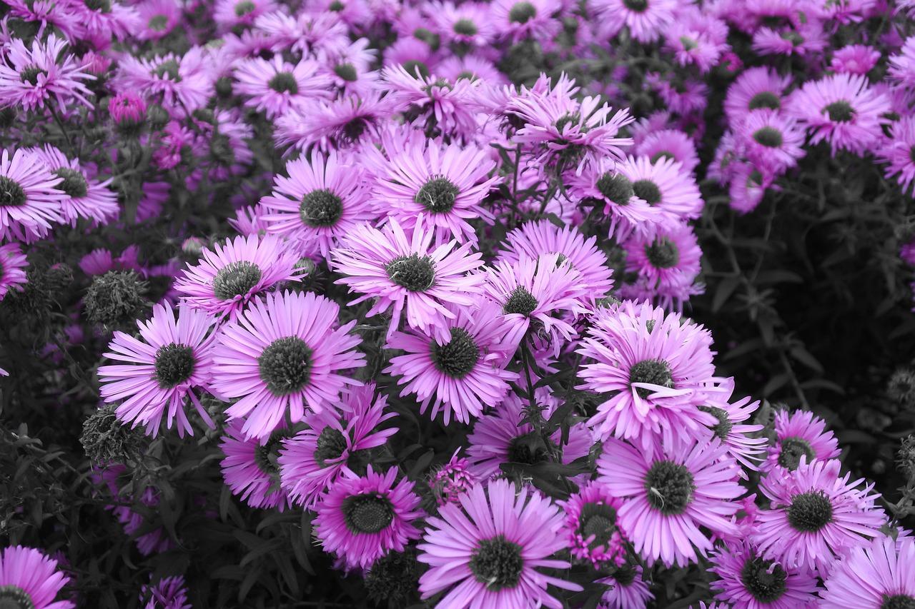 возможно, садовые цветы с фиолетовыми цветками картинки загорье приобретаются договору