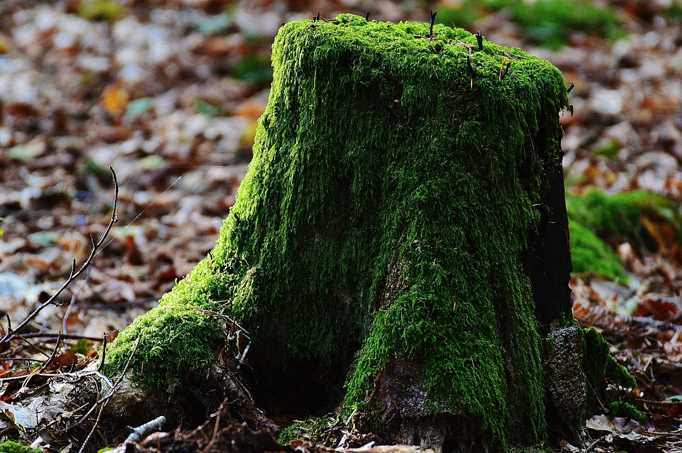 Tree stump moss wood · free photo on pixabay