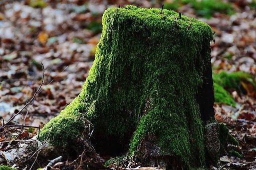 Baumstumpf, Moos, Holz, Wald, Grün