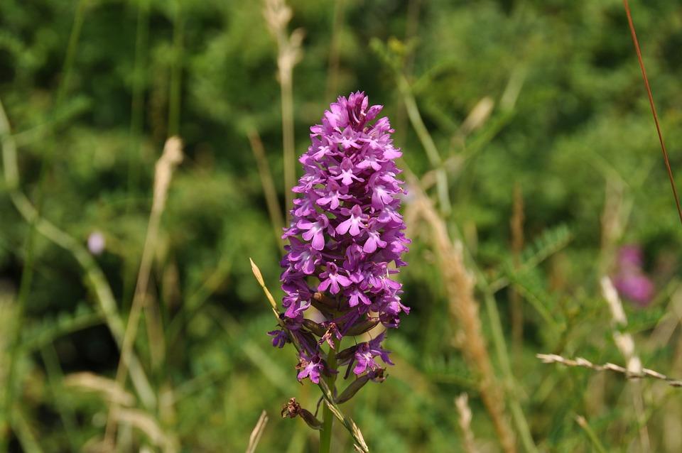 photo gratuite: orchidée sauvage, fleur, forêt - image gratuite