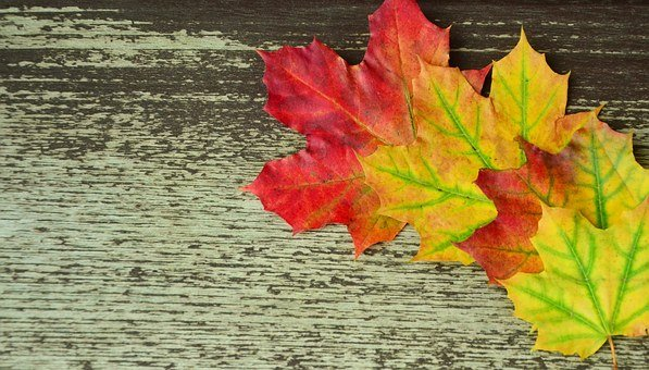 Background, Autumn, Leaves