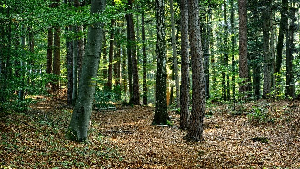 Kostenloses Foto Wald Mischwald Herbst Ruhe