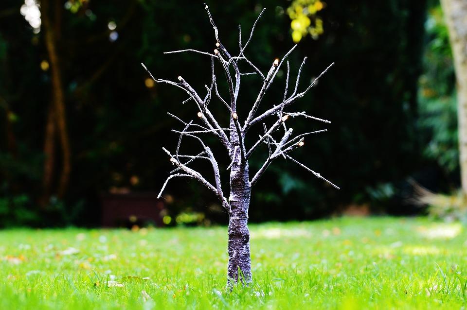 Baum äste Deko baum äste winter kostenloses foto auf pixabay