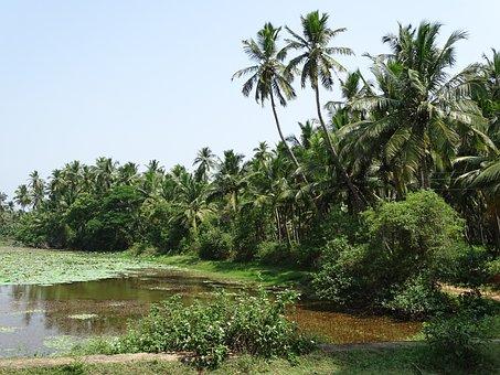 Farm, Twin Coco, Coconut, Palm Tree