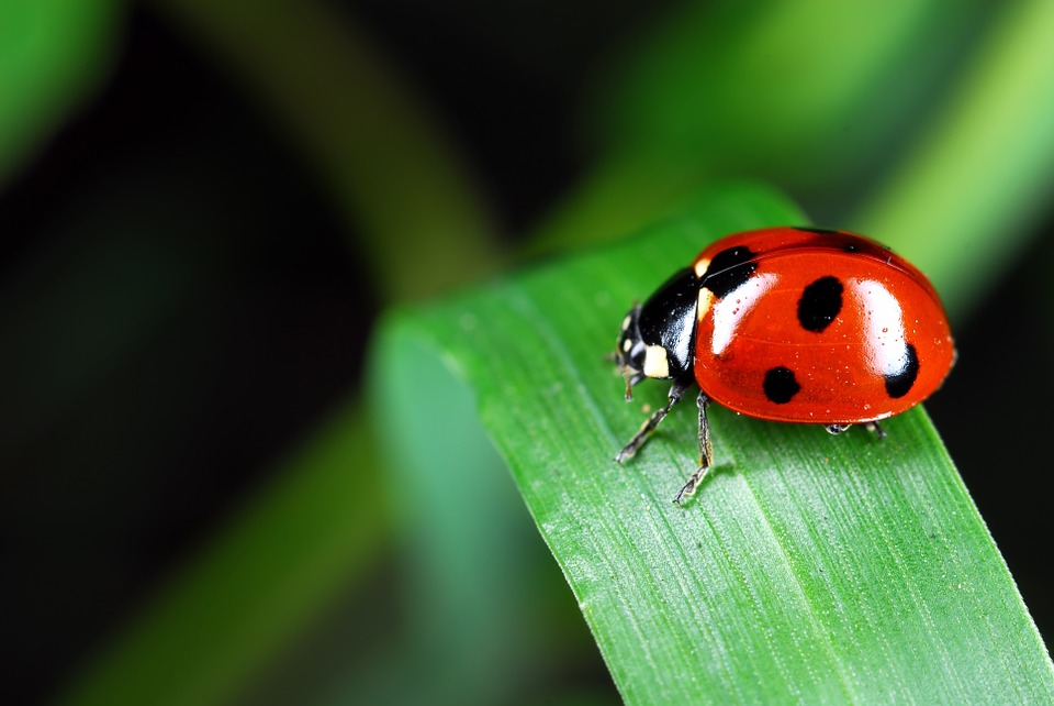 Kostenloses Foto: Marienkäfer, Insekten, Affix, Macro - Kostenloses Bild auf Pixabay ...