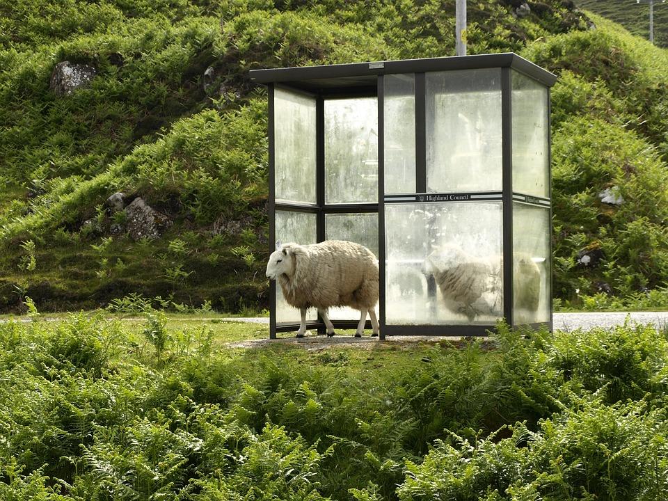 Owiec, Przystanek Autobusowy, Przystanek, Po Deszczu