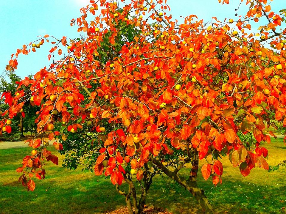 autumn nature park orange tree garden