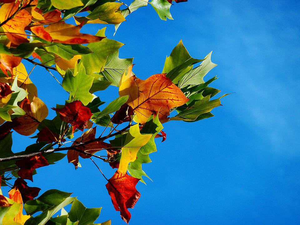 Free Photo Autumn Fall Leaves Leaves Free Image On