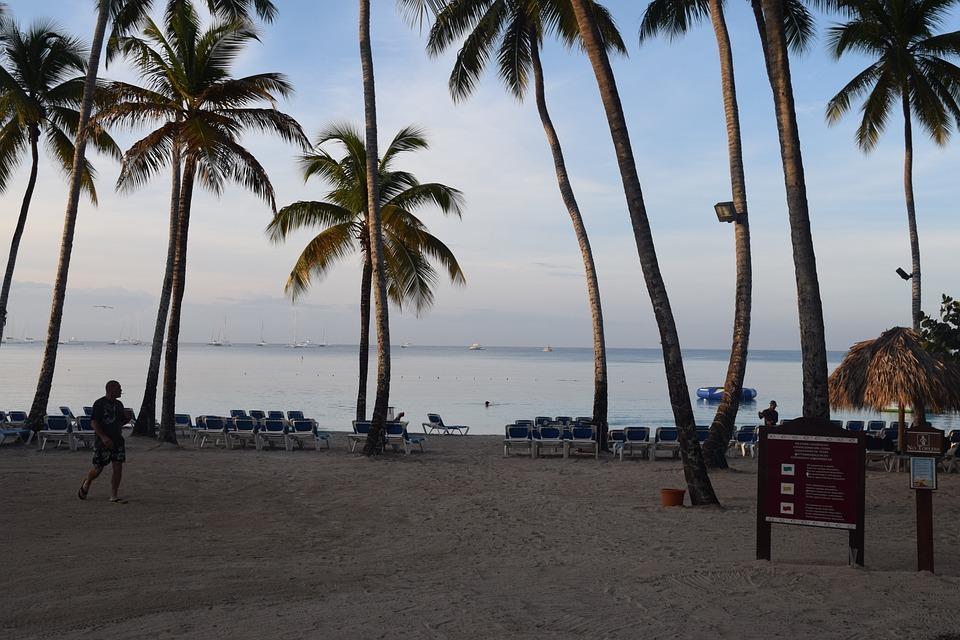 Dominikana, Wyspa, Beach, Karaiby, Palma, Tropikalny